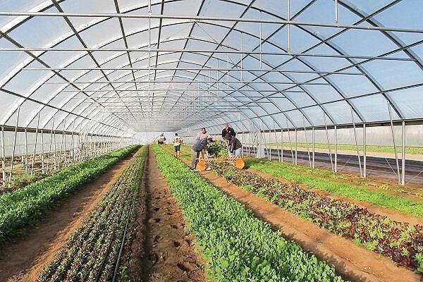 ساخت گلخانه دریایی برای تولید میوه و سبزی استوایی در جنوب ایران