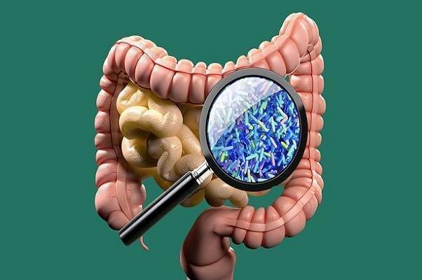 استفاده ار میکروب روده برای درمان بیماری ام اس