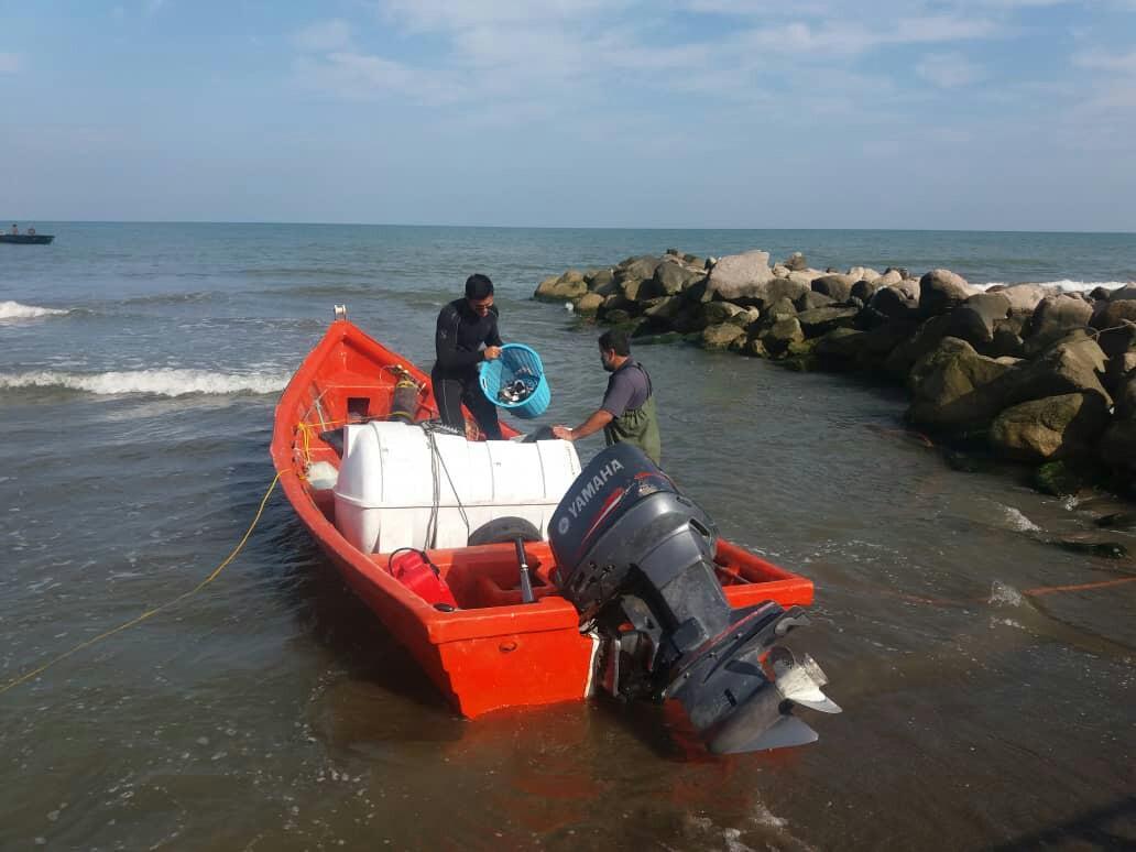 ذخیره سازی 142 هزار قطعه ماهی در دریا