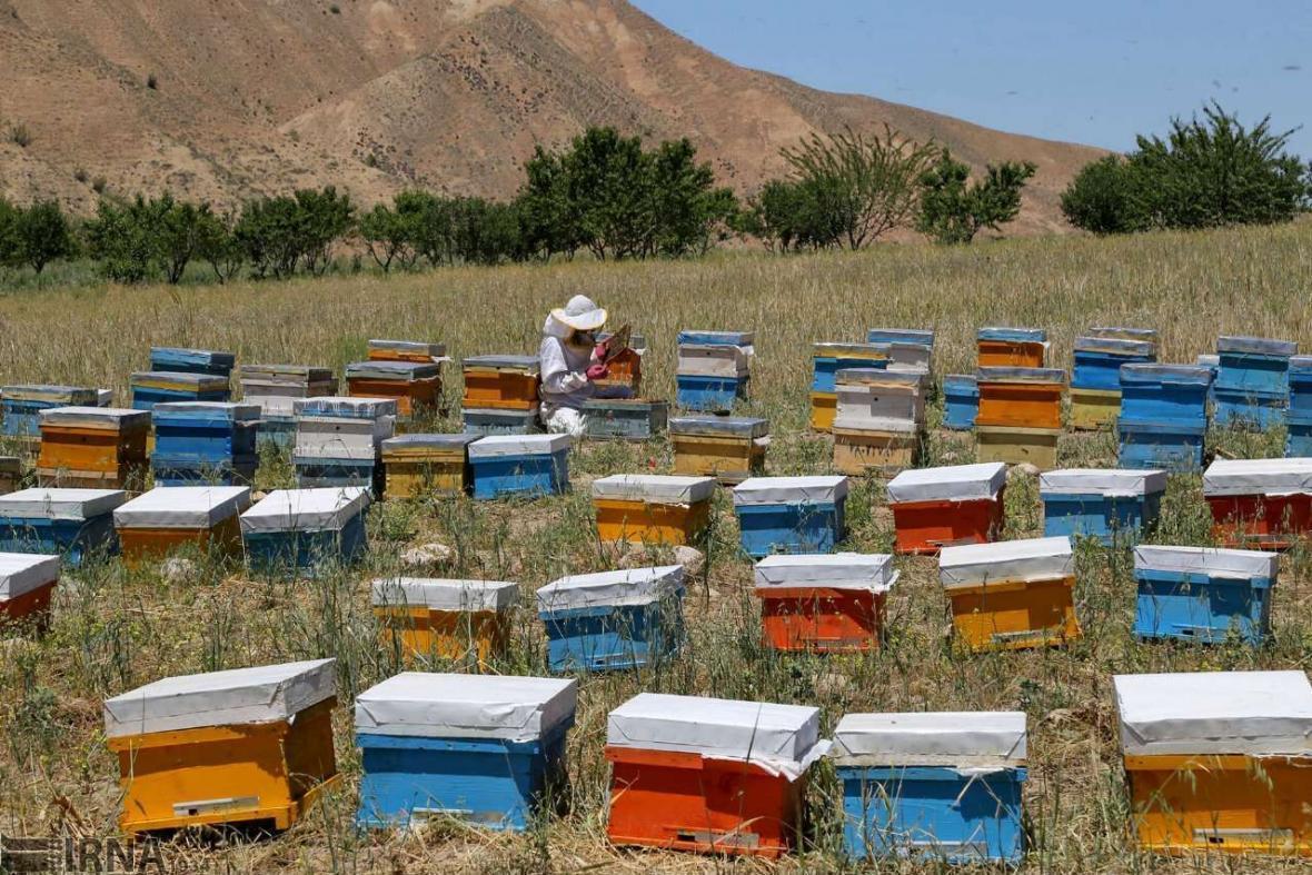 خبرنگاران زنبورداران کوچ رو آستارا برگ تردد می گیرند